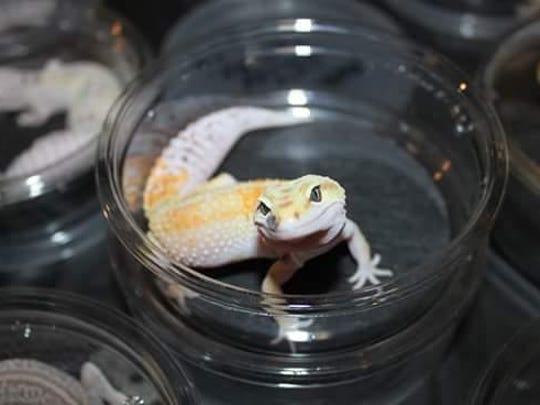 The Reptile Nation Expo is set for this weekend in Tulare.