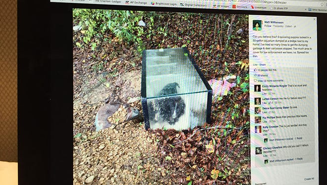 This Facebook post shows puppies abandoned sealed inside an aquarium near Clinton, Miss.