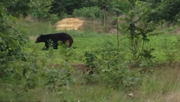 Winslow Township Police say there have been two reported bear sightings in two separate sections of the township in the same day.