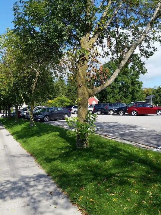 DCA 0905 ash trees