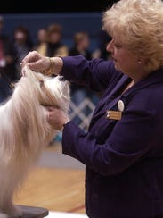 See dogs of all breeds during the AKC Putnam County