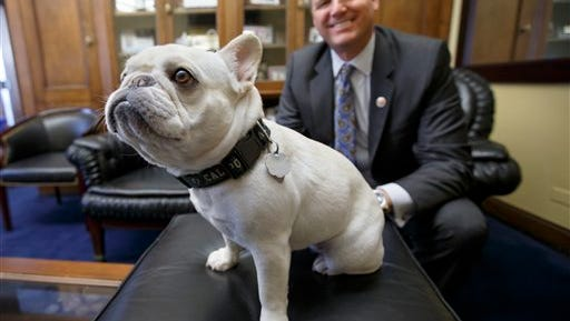 If Rep. Jeff Denham, R-Calif., and other lawmakers get their way,  pets like Lily, Denham's 15-pound French bulldog, will be welcome on Amtrak trains nationwide soon.  Lily, who has a penchant for jumping on furniture and laps so she can get closer to her many human visitors on Capitol Hill, and her owner like to travel together. The bipartisan push for an Amtrak policy change appears to be gaining momentum.