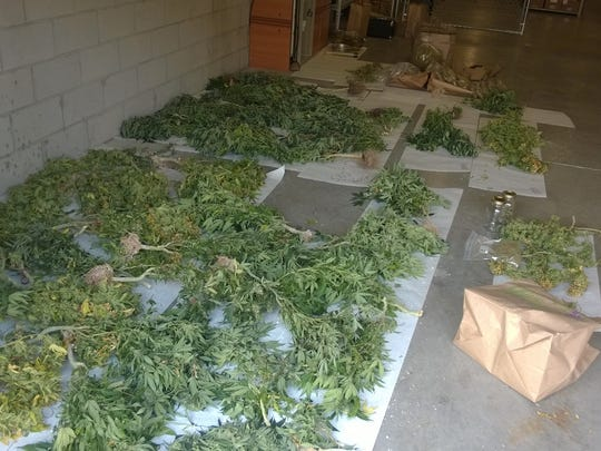 Confiscated marijuana