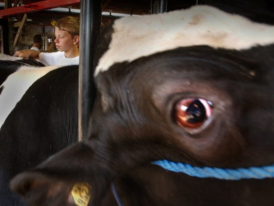 Kewaunee County study looks at role of cattle in water pollution.