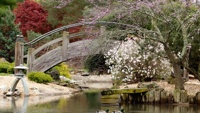 The Mizumoto Japanese Stroll Garden will be available to visitors in the early morning for Early Birds and in the evening for Romance in the Garden.