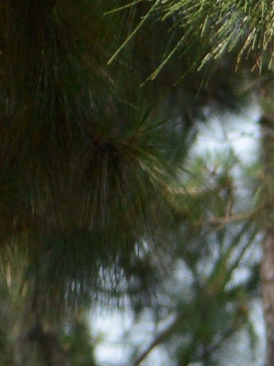 2013-5-14 tiger woods at no 2