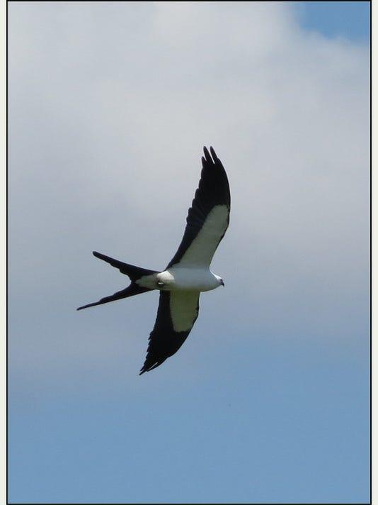 France Paulsen's kite