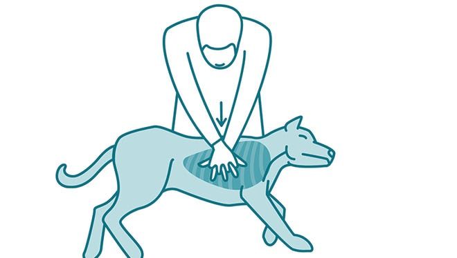"""When performing CPR on a dog, keep time by singing """"Stayin' Alive"""" in your head and match your compressions to the beat."""