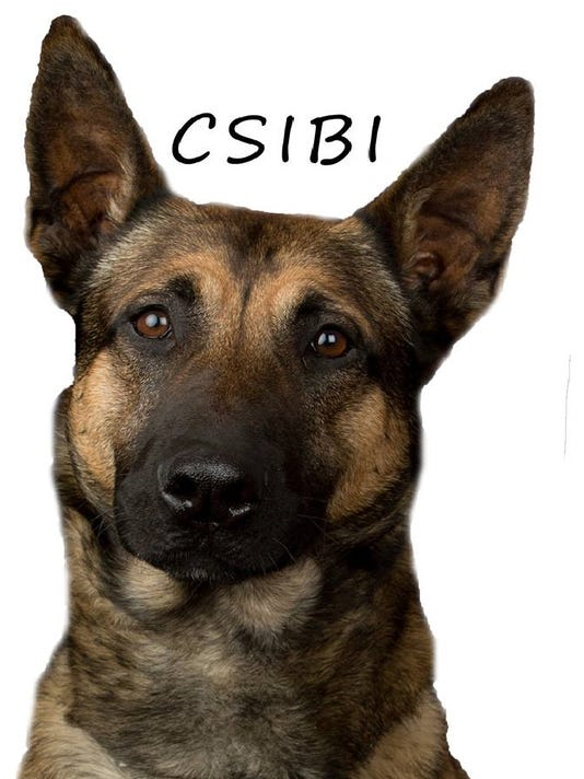 k9 dog csibi_cropped.jpg
