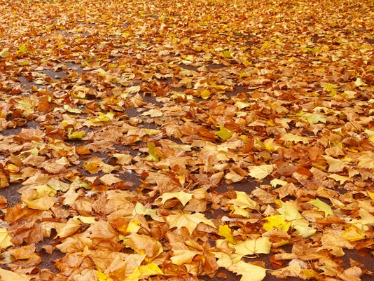 Mulch, leaf mold, compost: How to put autumn leaves to good use