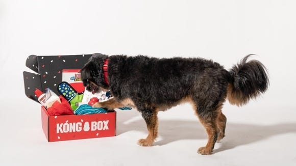 Your dog will have a blast playing with these KONG toys.