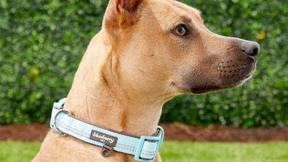 This collar is sturdy and stylish, and it comes in several sizes.