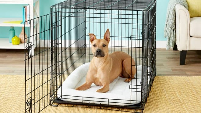 Crates ensure your dog doesn't get into trouble while you're away.