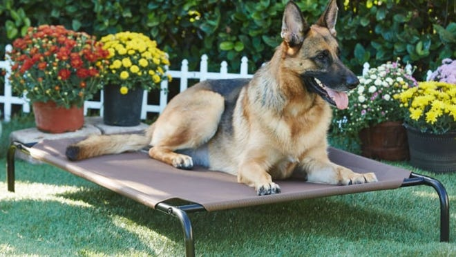 This is one of the best dog beds for chewers!