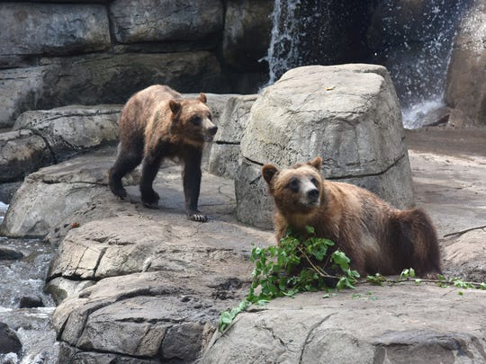 Bears at the Great Plains Zoo in Sioux Falls, S.D. on Saturday, June 23, 2018.