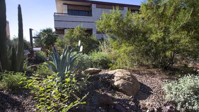 The Desert Fusion Garden at Peoria City Hall showcases desert plants that are an alternative to high-water-use landscaping. The city offers classes on xeriscape gardening.