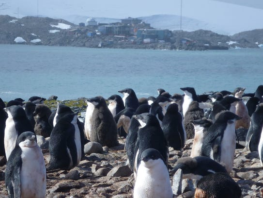 A colony of penguins in the West Antarctic Peninsula.