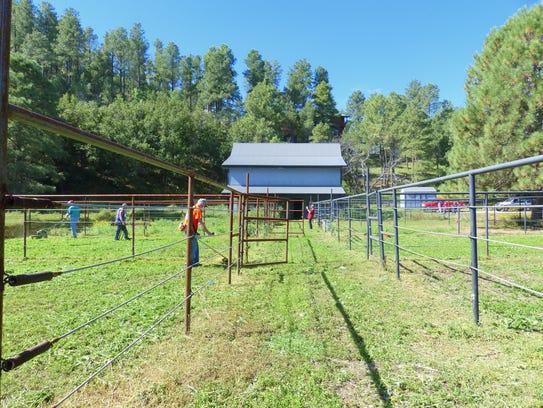 Volunteers cut down tall weeds in each pen to prepare