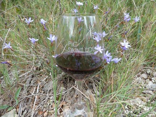 Wine glass with wild indigo flowers, Pic Saint Loup,