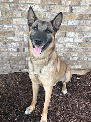 Max, a Richmond Police Department K-9, will receive a protective vest thanks to a donation from a nonprofit organization.