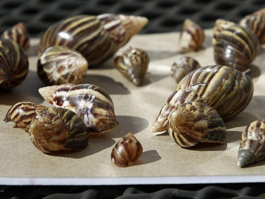 Giant African Snails