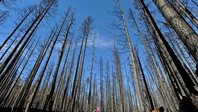 Cher Rydberg walks through a recently burned forest in the Sky Lake Wilderness Area.
