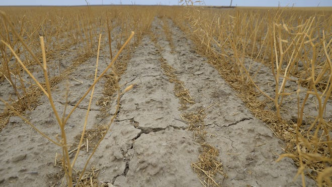 Dry, cracked earth in a mustard stubble field near Loma.