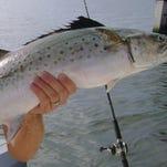 Weekend fishing report for Brevard, Sebastian Inlet