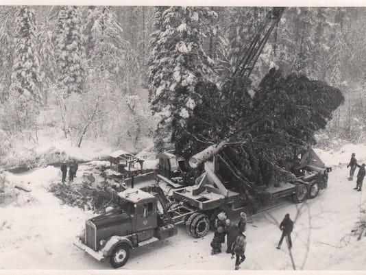 1958 tree FAL 1213 MHS Xmas Trees