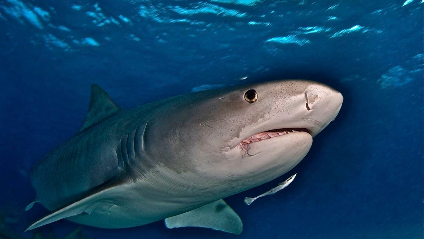 American tourist killed by tiger shark while diving off coast of Costa Rica
