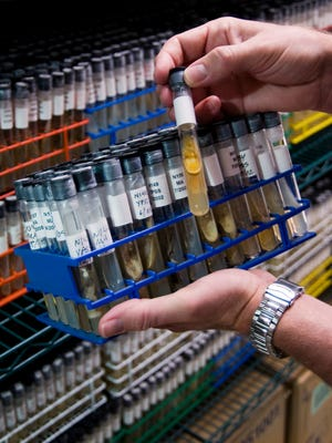 FAU's Marine Biomedical and Biotechnology Research Program, with support from the National Institutes of Health, is developing a library of enriched and pure materials for screening.