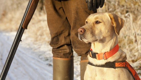 Pheasant hunters won't be able to hunt parts of the