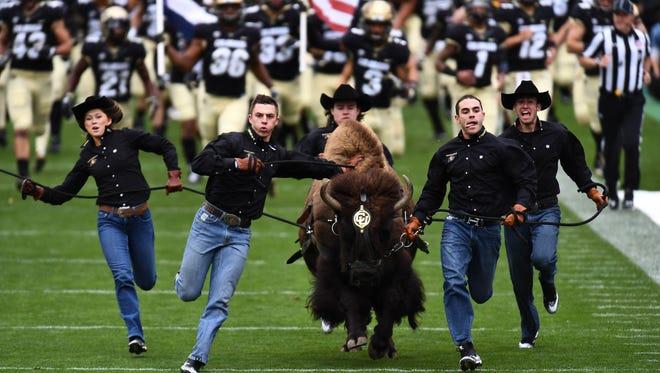 Colorado Buffaloes mascot Ralphie runs onto Folsom Field before a CU home game against the California Golden Bears.