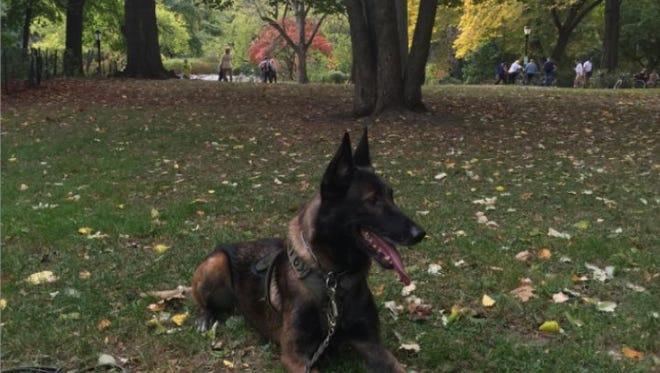 """Police canine Ice enjoys some down time in Central Park while in New York City to appear on """"The Today Show"""" as part of the """"Hero Dog Awards."""""""