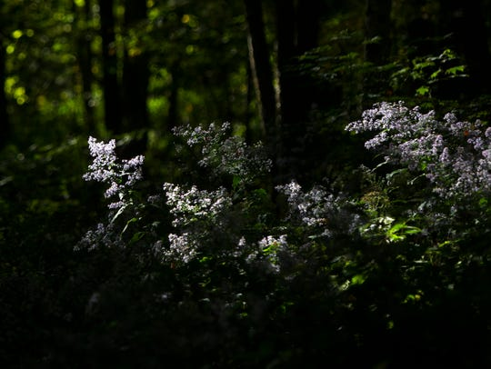 Sunlight hits flowers on the side of Chimney Tops trail