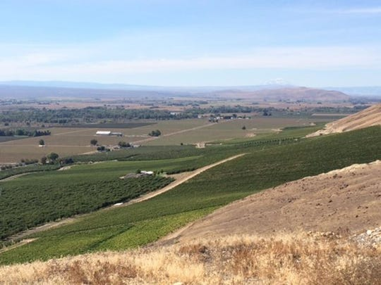 O wines vineyard.jpeg