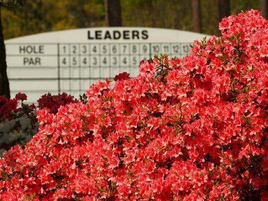 Azaleas bloom near the third fairway during a practice