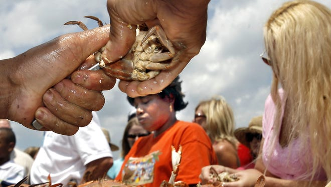 Deft-handed crab pickers pulled pounds of sweet crab meat during a previous Blue Crab Festival.