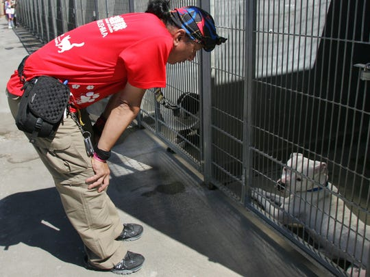 Akira Honda, founder of Nyander Guard Animal Rescue, meets with a few of the dogs at the Camarillo animal shelter on Saturday.