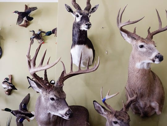 Mounted birds and animals at Mathew Courville's Taxidermy