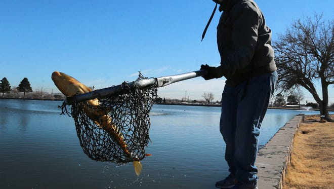 Susana Lozano uses a net to remove dead and dying fish from Ascarate Lake in January. An algae bloom was killing fish in the lake.