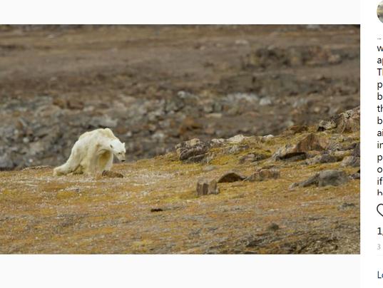 Instagram polar bear post