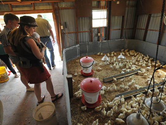 People check out chickens at Mahaffey Farms.