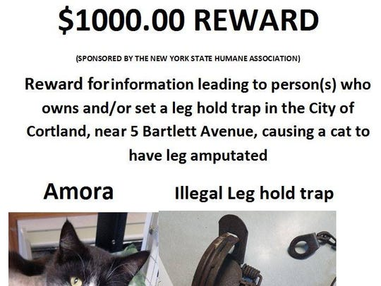 A $1,000 reward for information after a cat was found