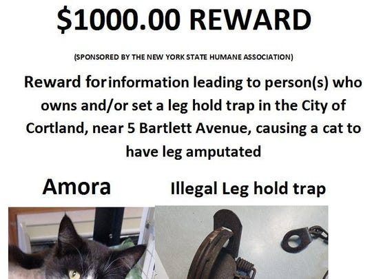 A $1,000 reward for information after a cat was found in a leg hold trap in Cortland.
