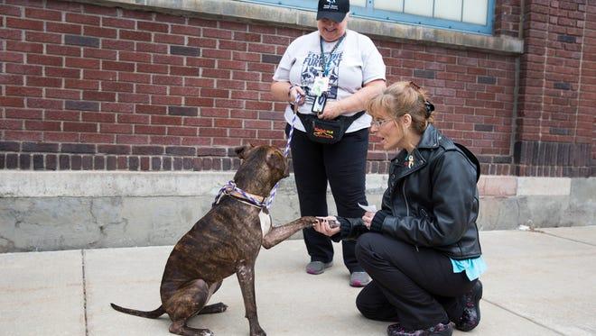 Verona Street Animal Society volunteer Dawn Saunders watches as Katie Weissenborn meets Gatora on Friday, November 27, 2015. Weissenborn chose not to meet Gatora because her dog didn't get along with her.