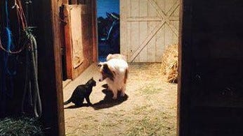 Barn cats offer natural rodent control, are guaranteed not to seek maternity leave, and they work for cat food.