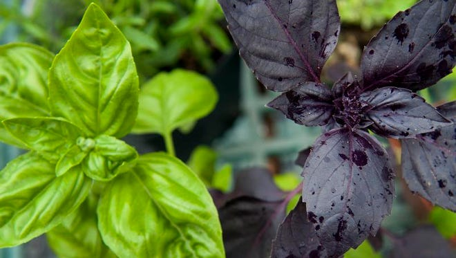 Cumberland County Historical Society will host an Herb Day in Colonial Times on June 23 at the Gibbon House in Greenwich.