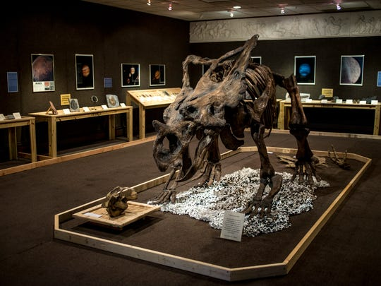 """The skeleton of a Chasmosaurus is featured at the Port Huron Museum's new """"Paleomania"""" exhibit."""