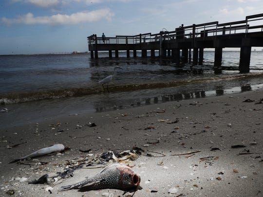 A suspected red tide event is killing sea life throughout